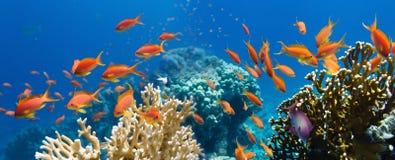 Coral e peixes Imagens de Stock Royalty Free
