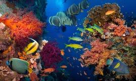 Coral e peixes imagens de stock