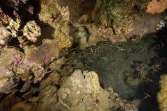 Coral e peixes Imagem de Stock