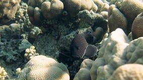 Coral e peixes no Mar Vermelho video estoque