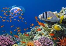 Coral e peixes no Mar Vermelho Fotografia de Stock