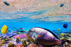 Coral e peixes no Mar Vermelho. Egipto, África. Imagens de Stock