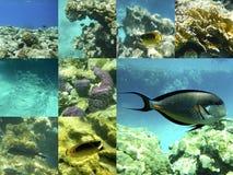Coral e peixes no Mar Vermelho, Egito, África Fotografia de Stock