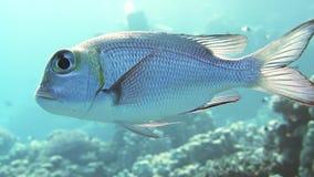 Coral e peixes no Mar Vermelho, Egito filme