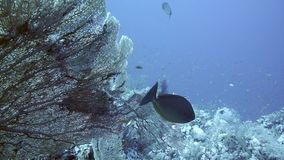 Coral e peixes no Mar Vermelho, Egito vídeos de arquivo