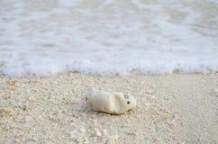 Coral e praia Fotos de Stock Royalty Free