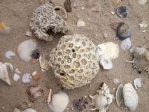 Coral e Shell, lado de mar Foto de Stock