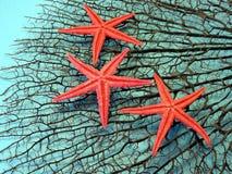 Coral e strafishes pretos imagem de stock