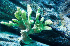 Coral en el fondo marino Fotos de archivo