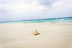 Coral en la playa Fotos de archivo libres de regalías