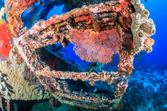 Coral Encrusted Shipwreck Stock Image