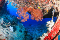 Coral Encrusted Shipwreck Royalty Free Stock Images