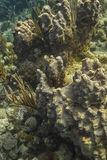 Coral encrusting sponge Royalty Free Stock Photos