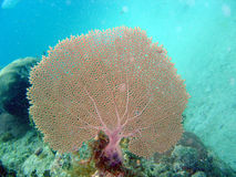 Coral fan stock photo