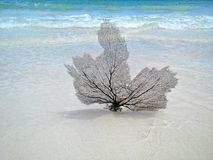 Coral Fan royalty free stock photos