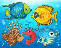Coral fauna theme image 4 Stock Photo