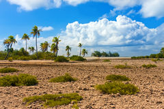 Coral fields and palm trees royalty free stock images