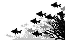 Coral fish Stock Image