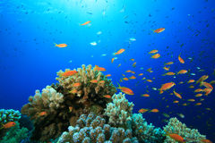 Coral and Fish Stock Photos