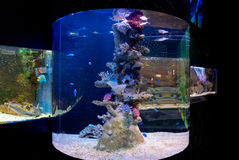 Coral and fish. In aquariums wildlife Stock Image