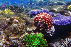 Coral and fish Stock Photography