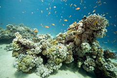 Coral and fish. Taken in Middle Garden Stock Photography