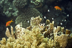 Coral and fish. Taken in Middle Garden Royalty Free Stock Photos