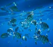 Coral Fish fotografia stock