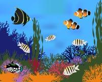 Coral Fish Photos stock
