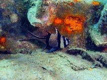 Coral Fish Images libres de droits