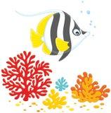 Coral Fish Immagine Stock