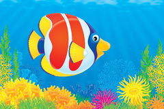 Coral fish Royalty Free Stock Images