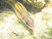 Coral Fish Stock Foto's