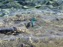 Coral Fish Stock Foto
