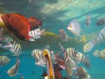 Coral Fish foto de archivo