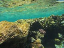 Coral Fish Royalty-vrije Stock Fotografie