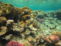 Coral Fish Stockbild