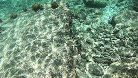Coral and fish on Bonaire stock video footage