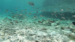 Coral and fish on Bonaire stock video