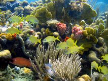 Coral and  fish in Caribbean sea Stock Photo