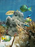 Coral and fish in the Caribbean Sea Stock Photos