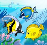 Coral fish collection in sea. Color illustration Royalty Free Stock Images