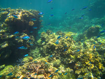 Coral and fish on the Great Barrier Reef, Australia. Underwater view of coral and fish on the Great Barrier Reef, in Queensland, Australia Royalty Free Stock Photography
