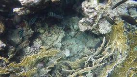 Coral Fish Movimento lento vídeos de arquivo