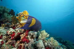 Coral and fish in the Red Sea Stock Images