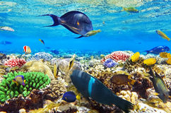 Coral and fish in the Red Sea.Egypt. Coral and fish in the Red Sea. Egypt Stock Photography