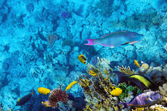 Coral and fish in the Red Sea.Egypt stock photos