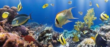 Coral and fish Royalty Free Stock Photos