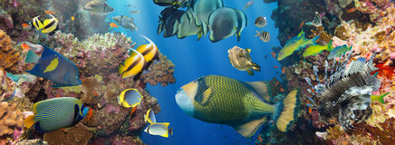 Coral and fish Stock Images