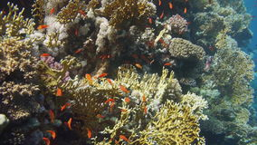 Coral and fish stock video footage